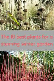 10 Creative Ways To Improve Your Winter Garden The MiddleSized