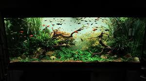 das wohnzimmer aquarium im jahr 2012 aquarium forum aus