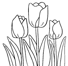 Beautiful Tulip Coloring Pages 55 In Site With