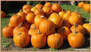 New Milford Pumpkin Festival Ct by The Frog And Penguinn Apples And Pumpkins Columbus Weekend