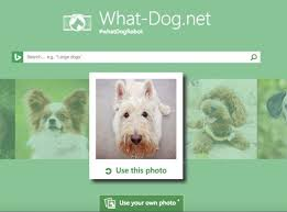What Dog Sheds The Most by Best 25 What Kind Of Dog Ideas On Pinterest Kinds Of Dogs What
