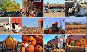 Pumpkin Patch Santa Barbara Ca by Mille Fiori Favoriti Pumpkin Picking At Anderson Farms In Erie