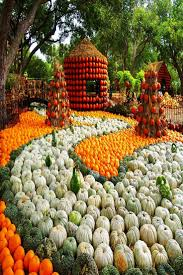 Pumpkin Patch Naples Fl 2015 by 299 Best Dream Destinations Images On Pinterest Travel Tips