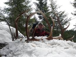 Moose Shed Antler Forums by Rokslide Shed Contest