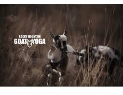 Rocky Mountain Goat Yoga - May 12th (Longmont) At Lucky Weather ... 1 Killed In Crash Volving Concrete Mixer Lgmont Sales 1997 Autocar Acl64 For Sale In Colorado Truckpapercom 1976 Intertional S1600 Co 5003314932 2009 Dodge Ram 5500 2019 Gulf Stream Bt Cruiser 5230 Rvtradercom Morning Brief City Council Designated June 1823 2018 As Summit Tacos Food Truck Visit Denver Grandoozy Festival Announces Local Food Lineup To Match Alist Cu Buffs Blog Post List Larry H Miller Toyota Boulder Proudly Honda Used Car Deals Loveland Co Lafayette