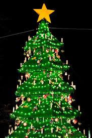 51 Mountain King Christmas Tree Ideas Decoration