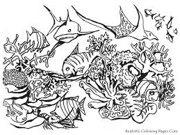 Realistic Ocean Animals Coloring Pages