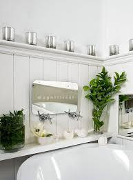 Plants For Bathroom Counter by 22 Best Plantas En El Baño Images On Pinterest Plants Bathroom