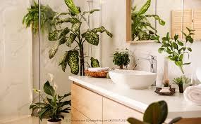 pflanzen für das badezimmer zimmerpflanzen fürs bad