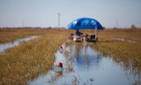 In Louisiana, Farmers Use Rice Fields As Crayfish Ponds - The New ... Used Cars For Sale At Boltons Truck Junction In Lake Charles La Harleydavidson Of Is Located Shop Billy Navarre Chevrolet Sulphur New Car Dealership 2007 Intertional 9900ix Eagle Sale Charles By Dealer 2016 Silverado 1500 Ltz City Louisiana Certified Trucks Wc Autos Llc Dealer Yes We Can Help Finance You All Star Buick Gmc Serving The Elite Service Recovery Towing 2019 Vehicles