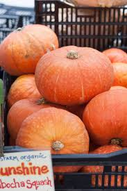 Types Of Pumpkins And Squash by The 25 Best Winter Squash Varieties Ideas On Pinterest