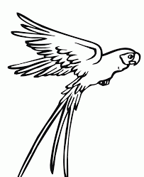 Flying Bird Coloring Pages Falcon