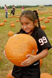 Pumpkin Patch Houston Oil Ranch by First Taste Of Fall Means Pumpkin Patch Pilgrimage Houston Chronicle