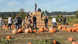 Seymour Pumpkin Festival Parking by Prime Time For Local Pumpkin Patches Youtube