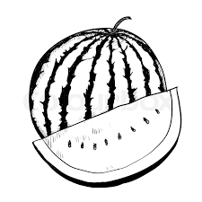 Hand drawing of Watermelon on white background Black and White simple line Vector Illustration for Coloring Book Line Drawn Vector Stock Vector