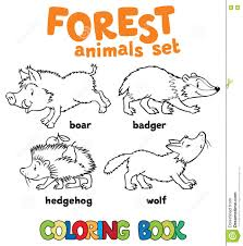 Animals Boar Book Children Coloring Forest