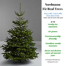 7 Ft Pre Lit Christmas Tree Argos by Christmas Tree Product Review Okayzions