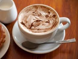 cat coffee the of cats in your latte that s taking coffee houses