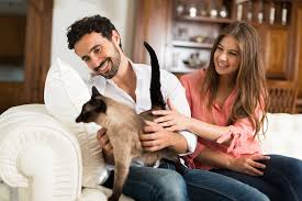burke animal clinic preventative care for your pets veterinarian in burke