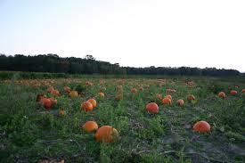 Best Pumpkin Farms In Maryland by Pumpkin Patches On Delmarva 2015 Delmarvalife