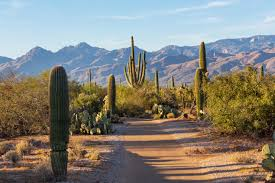tucson expert roofing services