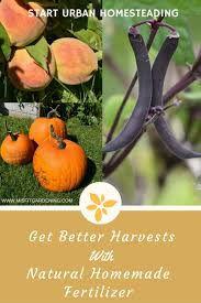 Natural Fertilizer For Pumpkins by Learn The Secret To Getting Better Harvests With Homemade Natural