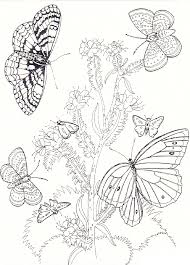 Butterfly And Flower Coloring Pages For Adults 1