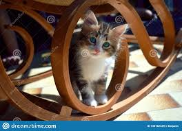 Cat Under A Rocking Chair Stock Image. Image Of Breed ...