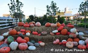 Pumpkin Patch Waco Tx 2015 by Silobration At Magnolia Market And Fixer Upper Fandom Diggingdigging