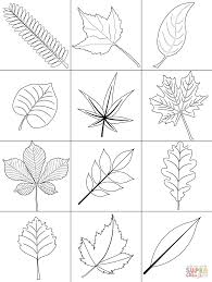 Click The Autumn Leaves Coloring Pages