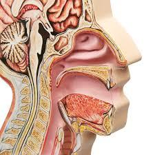 NGStrip Adult Nasal Tube Fastener NG50