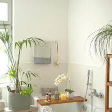 pflanzen fürs bad diese 10 arten eignen sich das haus