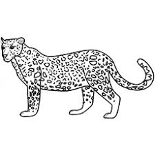 Wild Animal Leopard Zebra Eating Grass Coloring Pages