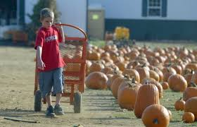 Pumpkin Picking Nj Near Staten Island by Where To Go Apple And Pumpkin Picking This Fall Season Silive Com