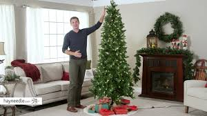 6ft Alaskan Flocked Christmas Tree by 7 5 Ft Natural Cut Salem Spruce Christmas Tree With Instant Glow