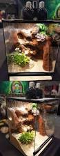 Crested Gecko Halloween Morph For Sale Uk by Best 25 Gecko Terrarium Ideas On Pinterest Gecko Cage Reptile