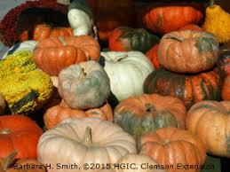 Piedmont Service Center Pumpkin Patch by Hgic 1318 Pumpkins U0026 Winter Squash Extension Clemson