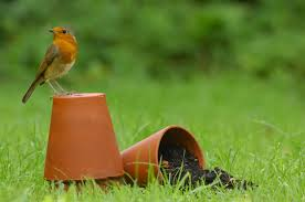 welcome wildlife to your garden