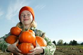 Pumpkin Patch Dixon Il by Pumpkin Farms Pumpkin Patch Farms Near Schaumburg Il Listed By