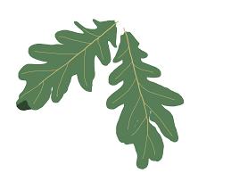 4608x3456 Oak tree clip art png