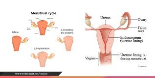 Uterus Lining Shedding During Pregnancy by Learn How To Get Rid Of Period Cramps Whitedust