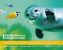 aquarium geant a visiter belgique tous les aquariums publics