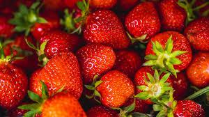 welche erdbeersorte taugt zum so essen für marmelade oder kuchen