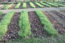 Homemade Fertilizer For Pumpkins by 5 Natural Diy Fertilizers For Your Garden And Flowerbeds