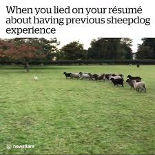 When You Lied On Your Résumé About Having Previous Sheepdog Experience |  Facebook Should You Fess Up To Your Boss Or Hr If Lied On The Top 5 Reasons You Cant Lie On Your Resume Talentegg Catching Lies In The Hiring Process What Happens When Palmer Group Dont Lie Cv Untrue Credentials Can Land A Can Get Away With Lying Ulearning Inglish Resume 3 Ways Proceed When Lied Wikihow Steve Blank