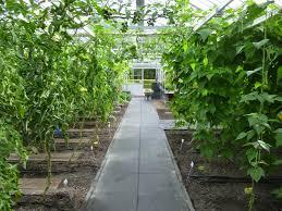 Garden of Aaron 2014