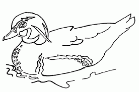 Duck Coloring Pages Easy Pictures Animal
