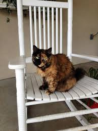 Relaxing In A Rocking Chair Is A Great Way To Enjoy The ...