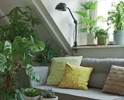grünpflanzen fürs zimmer mein schöner garten