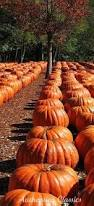 Celebrate Highwood Highwood Packs In The Pumpkins At Annual Fest by 2545 Best Beautiful Charm Of America Images On Pinterest